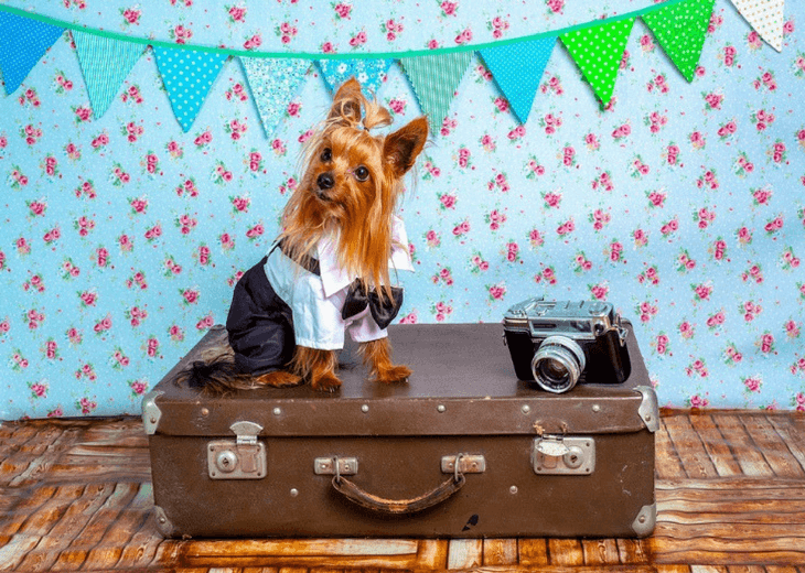 Dog Getting Ready For Vacation With Owner