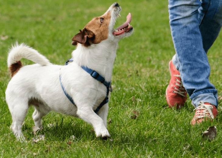 Can I Train My Dog To Leave Dog Food Out