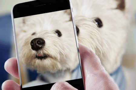 Best Pet Camera Reviews See What Fido Does When Home Alone
