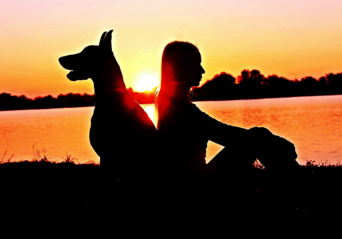 Silhouette Of Loyal Dog And Girl