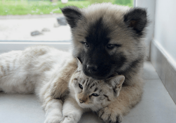 Tips For Introducing A New Dog To Cats