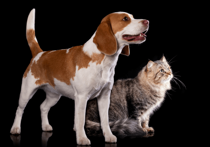 Introducing a New Puppy to Your Cat