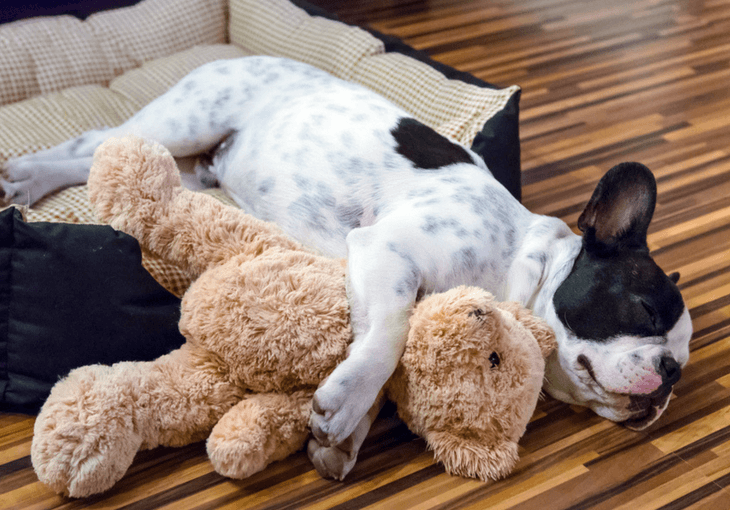 5 Benefits Of Dog Beds