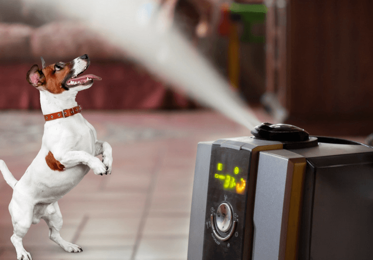 Air Purifiers For Pet Allergies