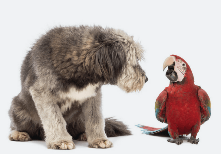 Train Your Dog to Get Along with Your Bird