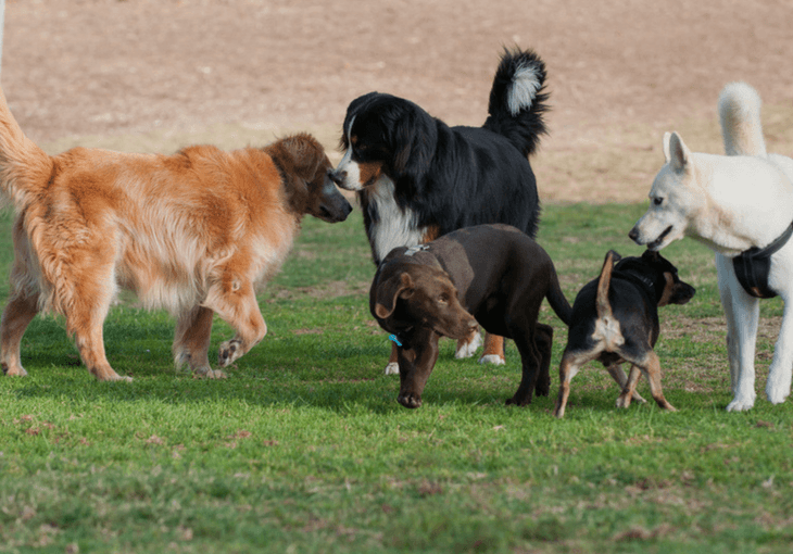 How to socialize your dog with these easy steps