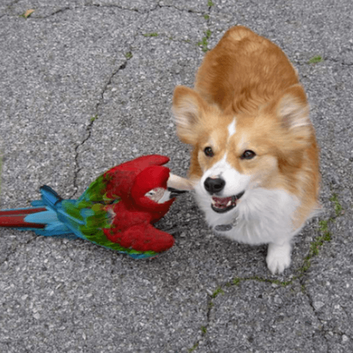 Dog And Bird Interacting
