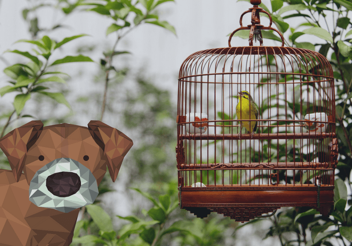 Bird In Cage With New Dog