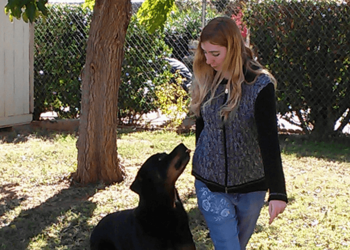 Size Cm Obedience Training Commands