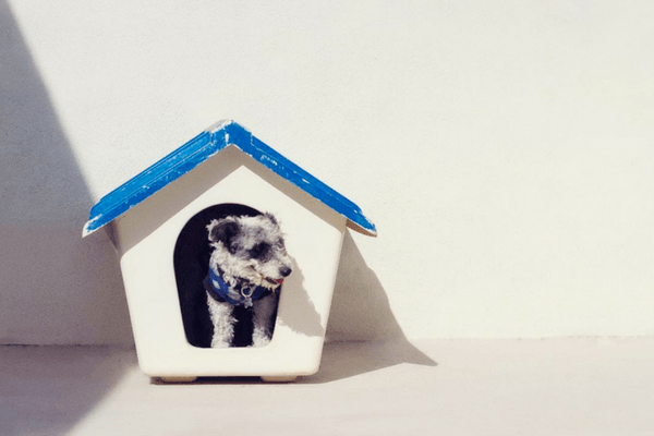 Dog In His Dog House