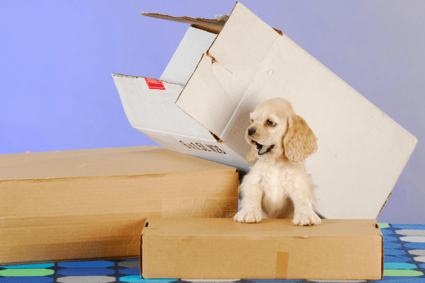 Dog Playing In Moving Boxes