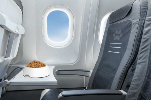 Airplane Seat With Bowl Of Dog Food