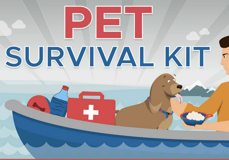 Survival Kit for Dogs Infograhic