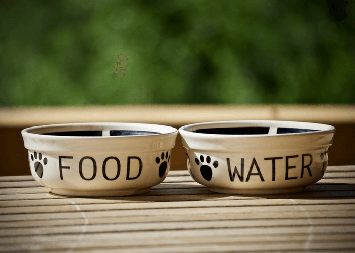 Canine Food And Water Dish On Table