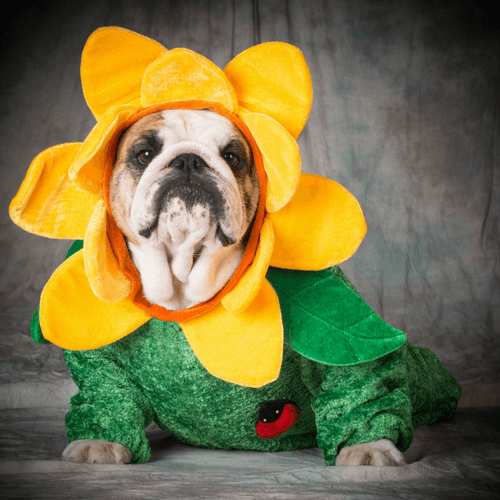 Cute Dog In Halloween Costume