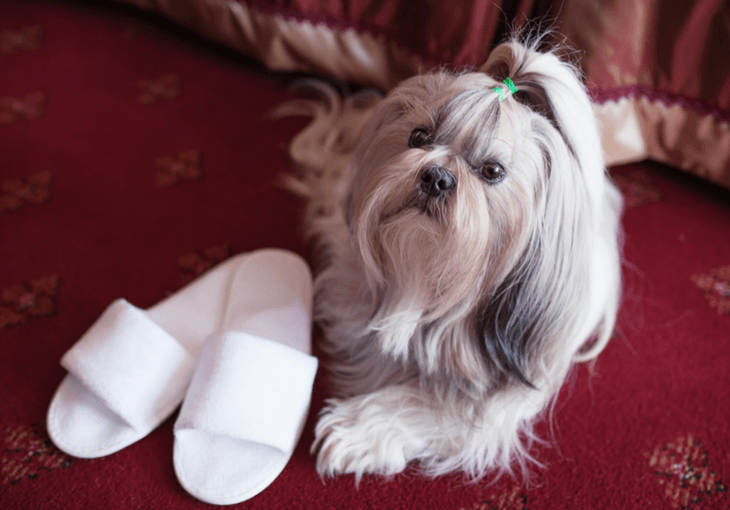 How to Find a Pet-Friendly Hotel