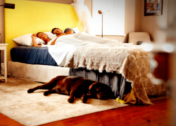 Couple And Dog Sleeping In Hotel Room