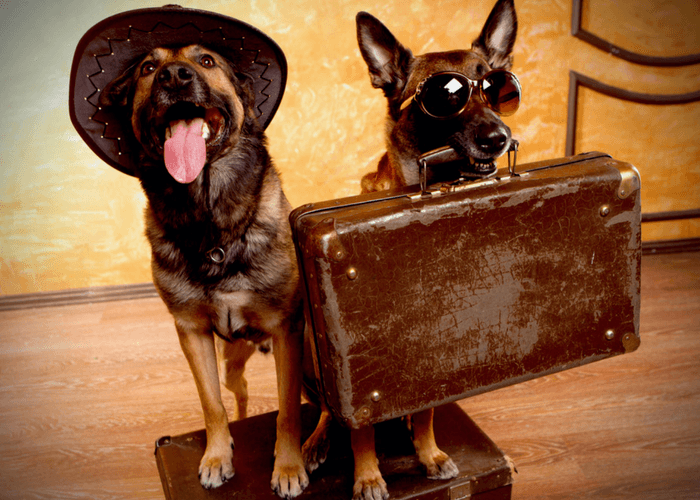 Two Dogs With Suitcases