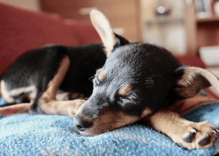 How To Train Your Dog Not To Chew His Bed