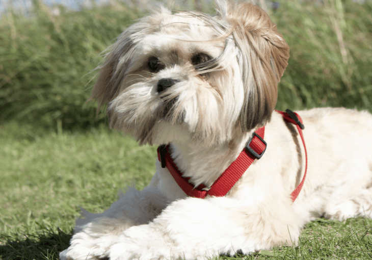 Dog Harness versus Collar Debate