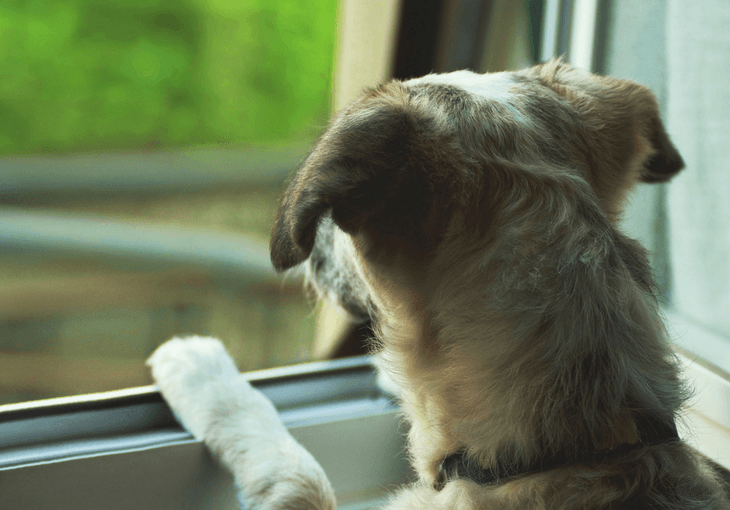 Tips For Leaving Puppy Home Alone