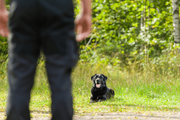 Dog With Owner Checking The Training Area