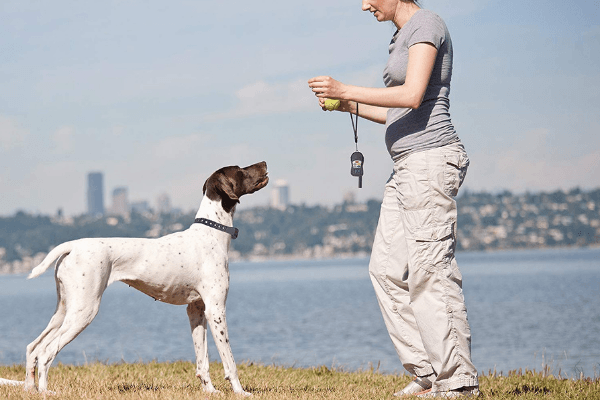 Dog Training With E-Collar