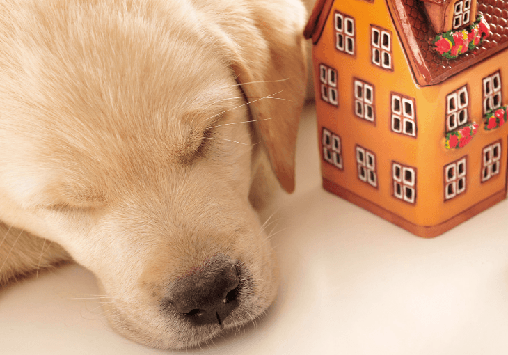 Tips For Puppy Proofing Your Home