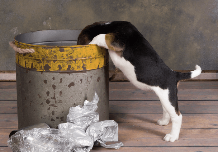 Puppy Getting Into The Trash
