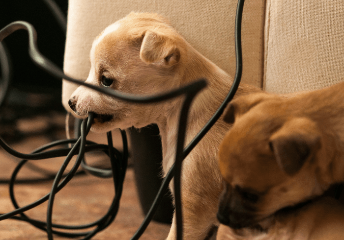 Puppies Chewing On Electrical Cords