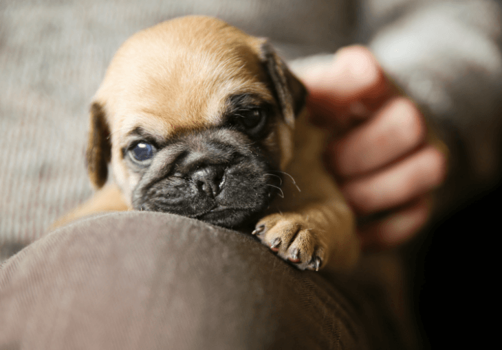 Tips To Know You're Working With A Responsible Dog Breeder