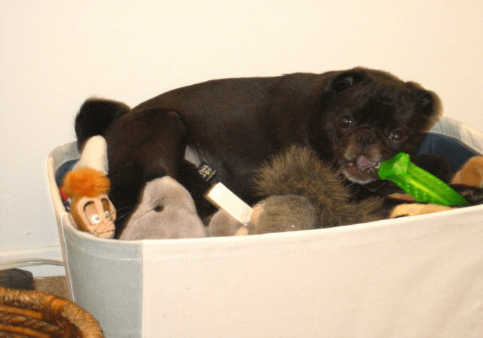 Puppy In A Basket Of Toys