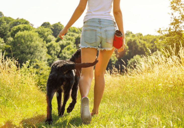 Why Dogs Are Such Great Motivators
