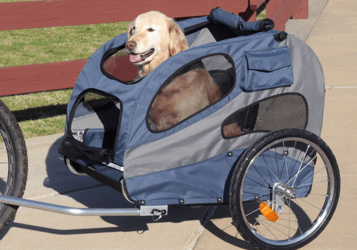 Canine Sitting In Bike Trailer Ready For A Ride