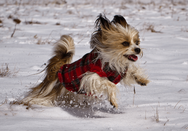 Ten Winter Safety Tips For Dogs