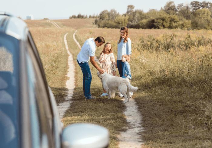 Family Giving Car Sick Dog A Break