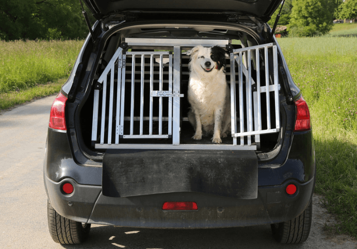 Use A Crate For Car Sickness In Canines