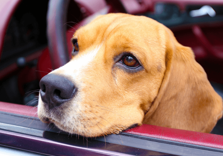 Tips For Dealing With Car Sickness In Dogs