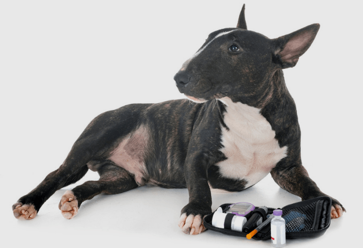 Dog With Blood Glucose Monitoring System
