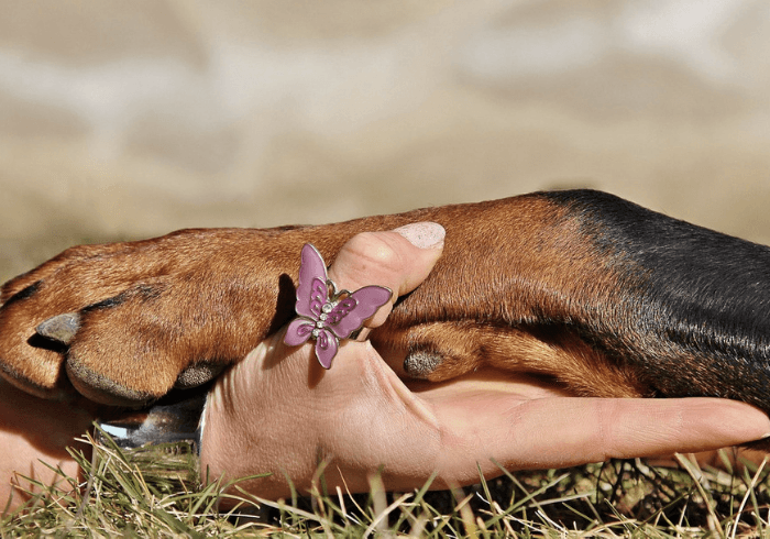 Human Hand Embraced With Dog Paw