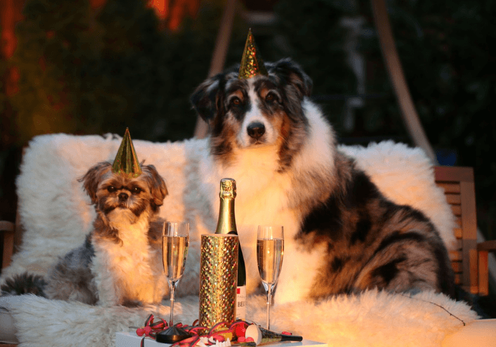 Two Dogs Celebrating The New Year