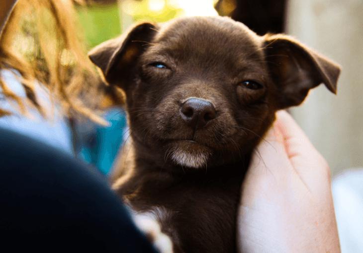 Seven Unique Ways To Celebrate Your Dog