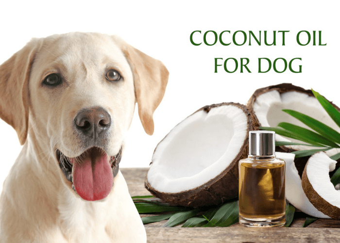 Puppy With Bottle Of Coconut Oil