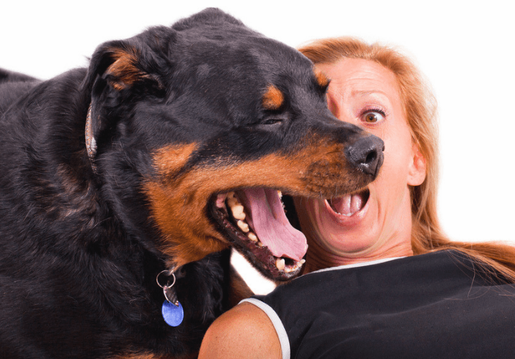 Dog Bad Breath Home Remedies