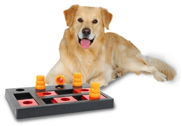 Young pup with interactive toy on white background