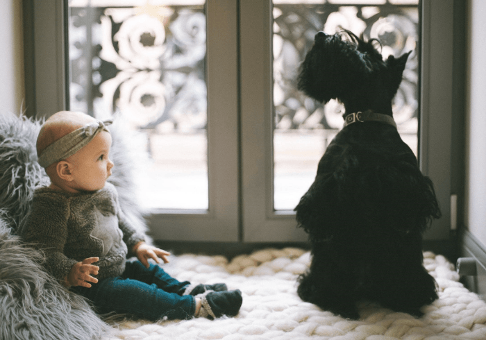 Toddler interacting with the family dog