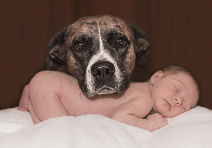 How to balance your new baby and dog