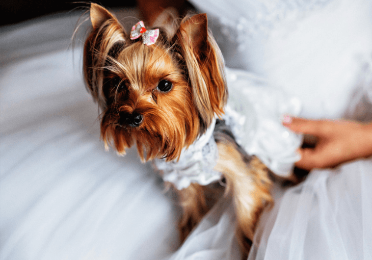 Tips for including dog on your wedding day