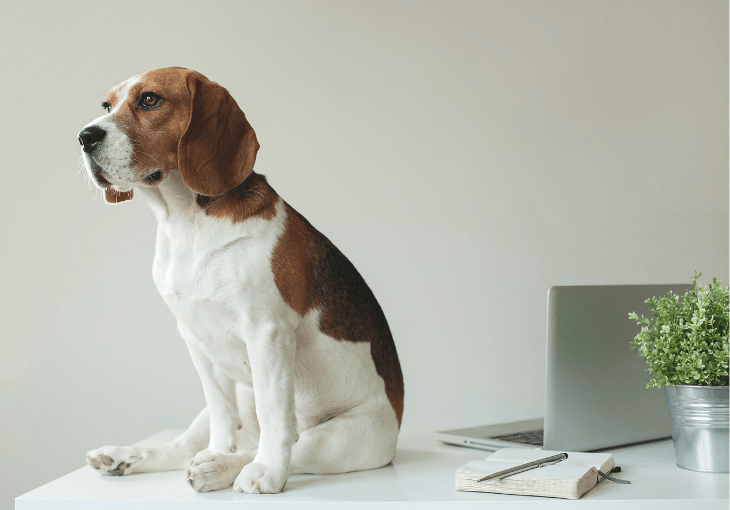 Tips For Taking Your Dog To Work