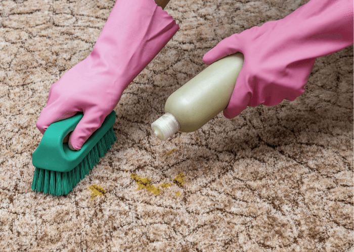 Pair of hands cleaning dog urine out of the carpet